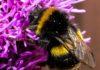 pszczółka 100x70 - Tygodnik Sanocki