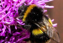 pszczółka 218x150 - Tygodnik Sanocki
