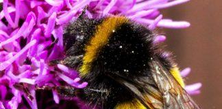 pszczółka 324x160 - Tygodnik Sanocki