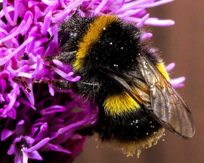 Poznańska radna przebrała się za pszczołę