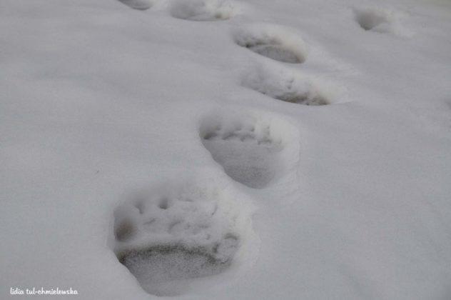 Zima w Bieszczadach 10 632x420 - Zima w Bieszczadach
