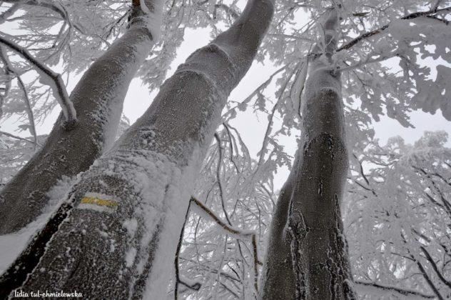Zima w Bieszczadach 14 632x420 - Zima w Bieszczadach