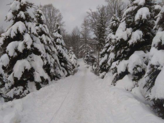Zima w Bieszczadach 29 560x420 - Zima w Bieszczadach