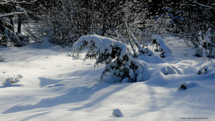 Zima w Bieszczadach 30 746x420 - Zima w Bieszczadach