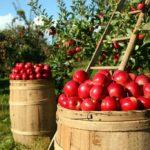 ARiMR: do 10 mln zł na inwestycje w przetwórstwo