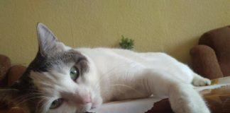 Cały świat dla czterech łap. Oto Najpiękniejsze sanockie koty!