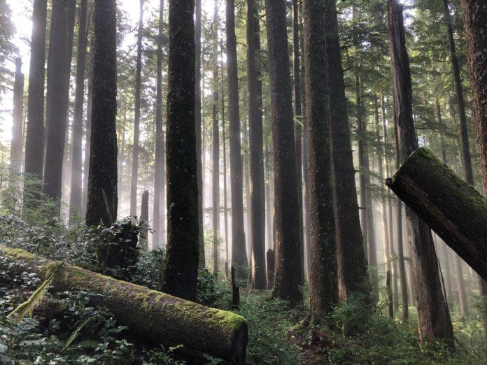 """Drewno w lasach - Martwe, a jednak ,,wciąż"""" żywe"""