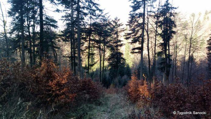 W lasach bez maseczki, zmienione godziny dla seniorów