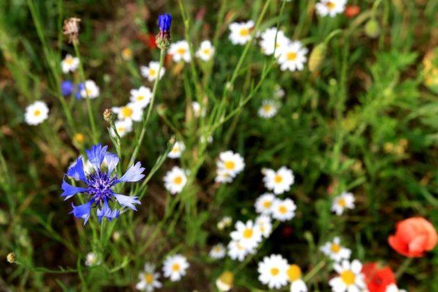 W Sanoku będą kwietne łąki