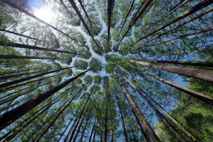 Weź pieniądze na posadzenie lasu