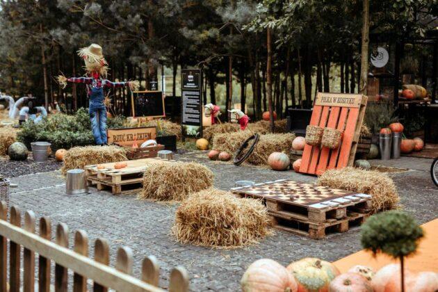 Jedyna na Podkarpaciu farma dyniowa wkrótce będzie dostępna!