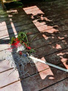 Lisy koło ogródków działkowych