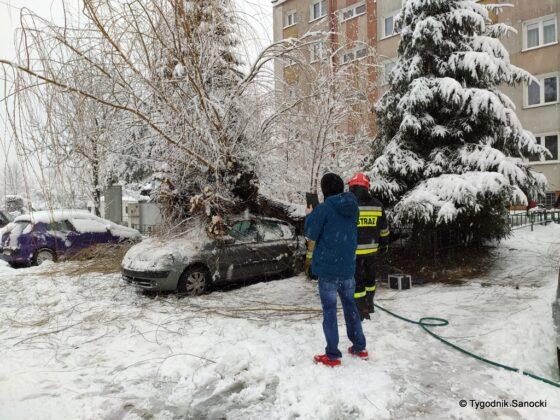 Na zaparkowany samochód spadło drzewo!