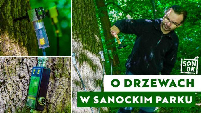 O drzewach w sanockim parku - materiał filmowy